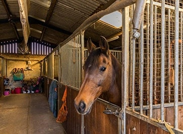Chibley Farm Stud and Equestrian Centre